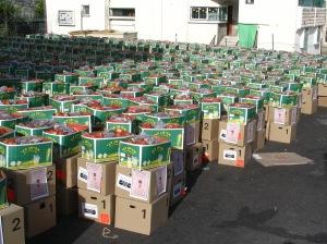 Distribution-Pesach-001